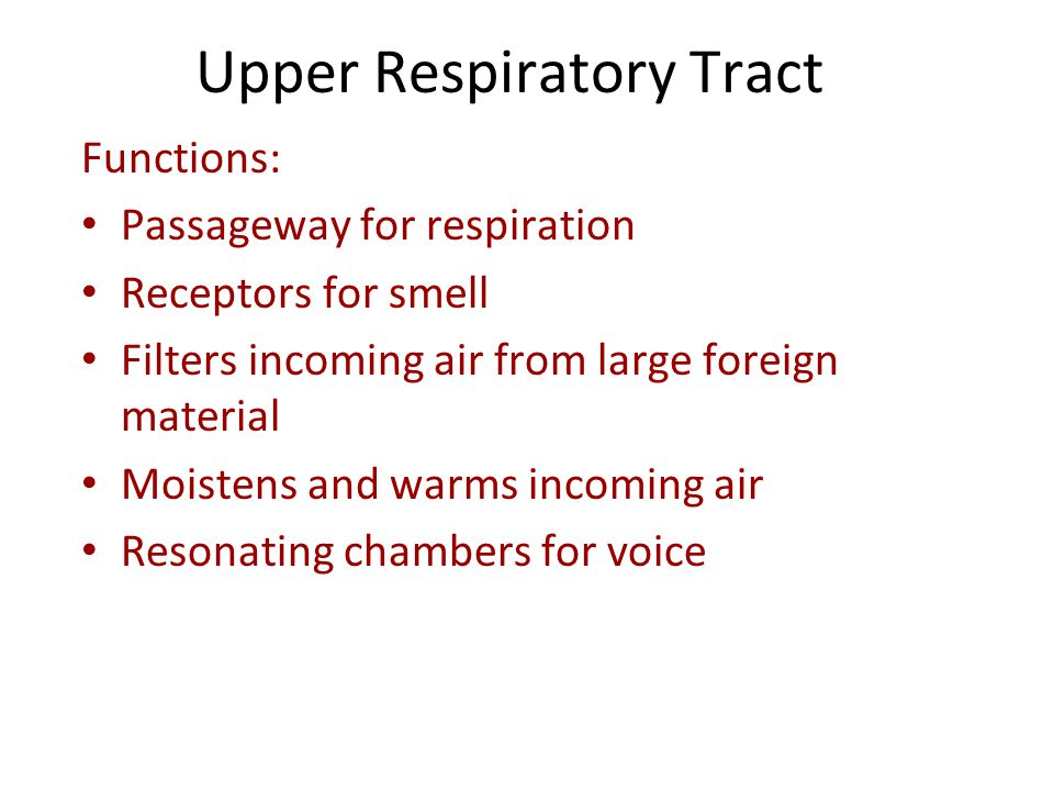Functions: Passageway for respiration Receptors for smell Filters incoming air from large foreign material Moistens and warms incoming air Resonating