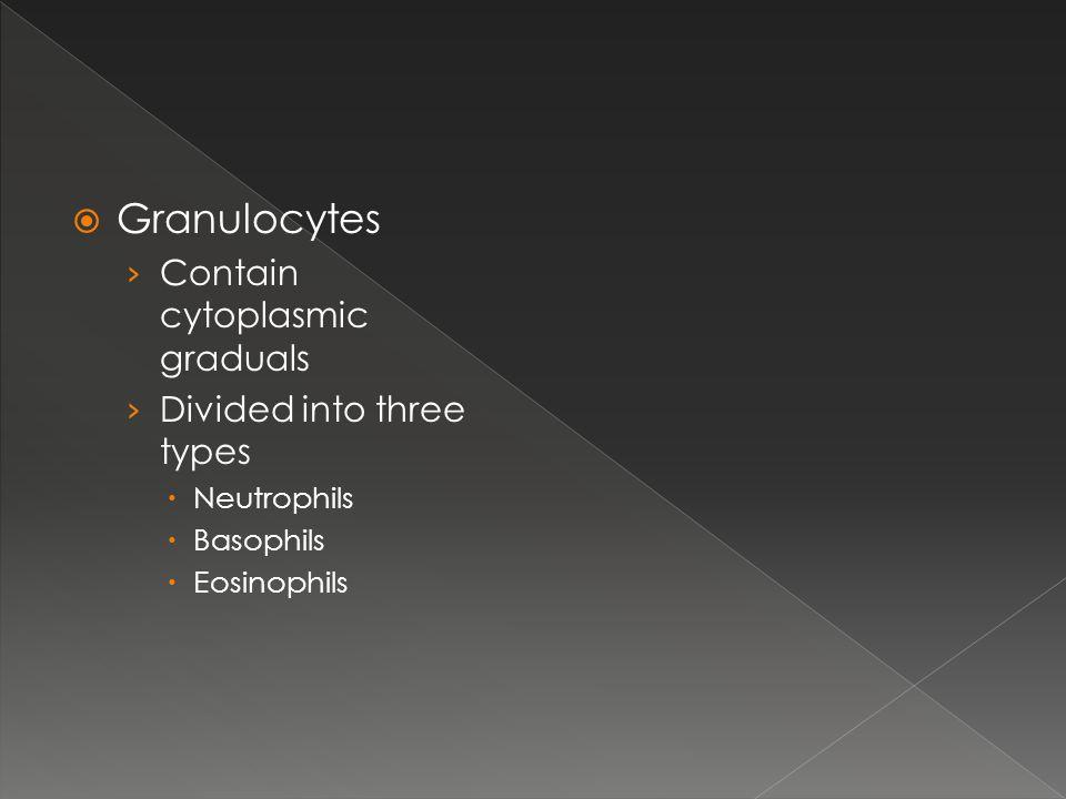  Granulocytes › Contain cytoplasmic graduals › Divided into three types  Neutrophils  Basophils  Eosinophils