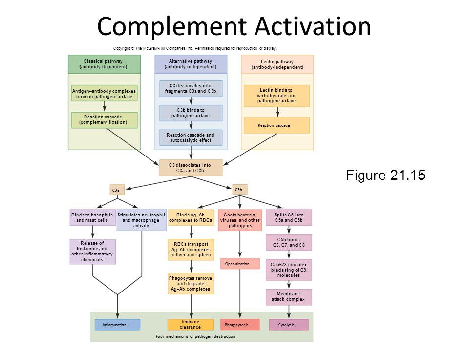 21-13 Complement Activation Figure 21.15 C3a C3b Four mechanisms of pathogen destruction Inflammation Cytolysis Opsonization Phagocytosis Reaction cas