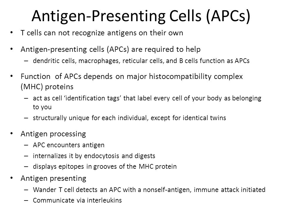 Antigen-Presenting Cells (APCs) T cells can not recognize antigens on their own Antigen-presenting cells (APCs) are required to help – dendritic cells