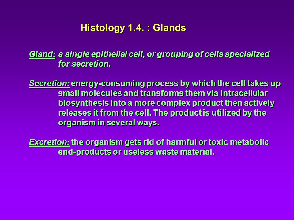 Histology 1.4. : Glands Gland: a single epithelial cell, or grouping of cells specialized for secretion. Secretion: energy-consuming process by which