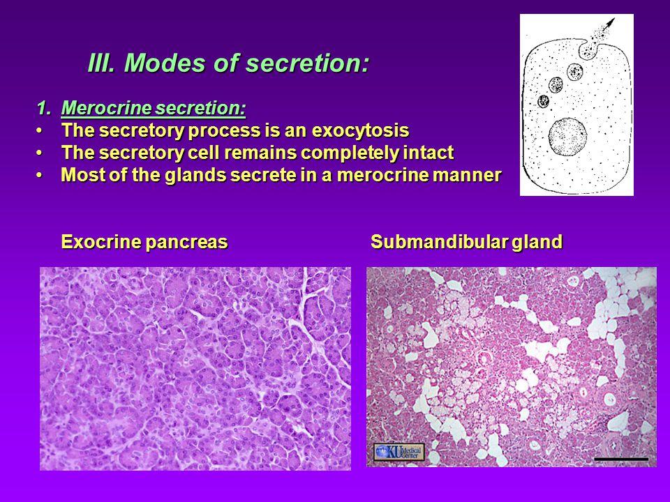 III. Modes of secretion: 1.Merocrine secretion: The secretory process is an exocytosisThe secretory process is an exocytosis The secretory cell remain