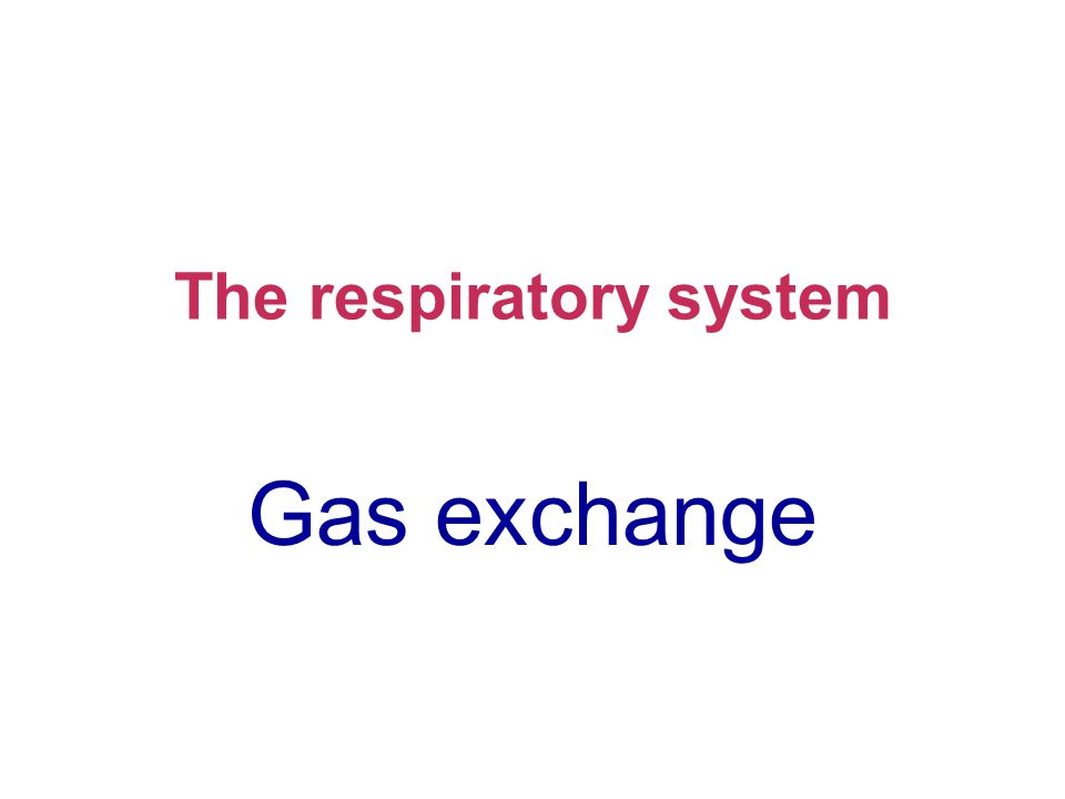 The respiratory system Gas exchange