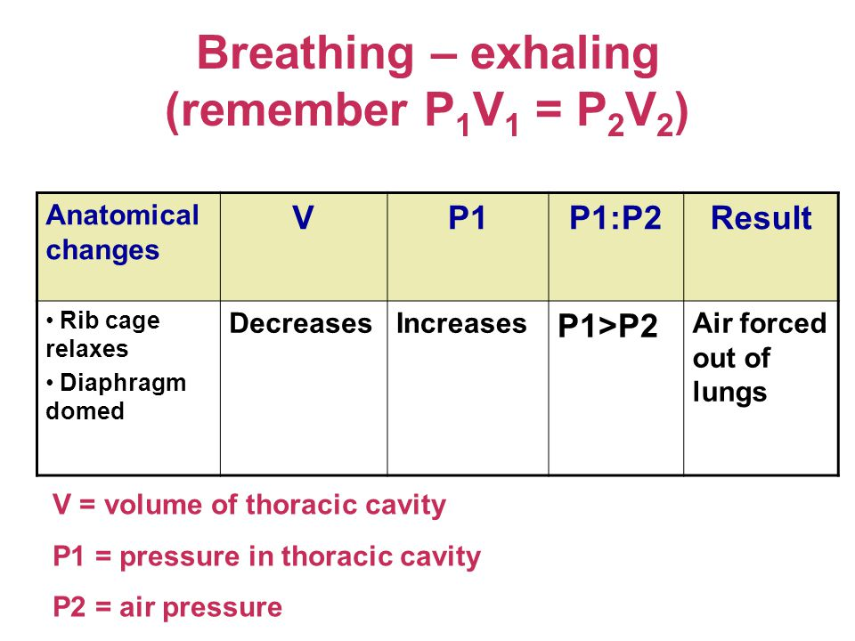 Breathing – exhaling (remember P 1 V 1 = P 2 V 2 ) Anatomical changes VP1P1:P2Result Rib cage relaxes Diaphragm domed DecreasesIncreases P1>P2 Air forced out of lungs V = volume of thoracic cavity P1 = pressure in thoracic cavity P2 = air pressure