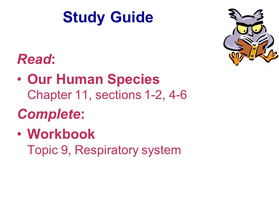 Study Guide Read: Our Human Species Chapter 11, sections 1-2, 4-6 Complete: Workbook Topic 9, Respiratory system