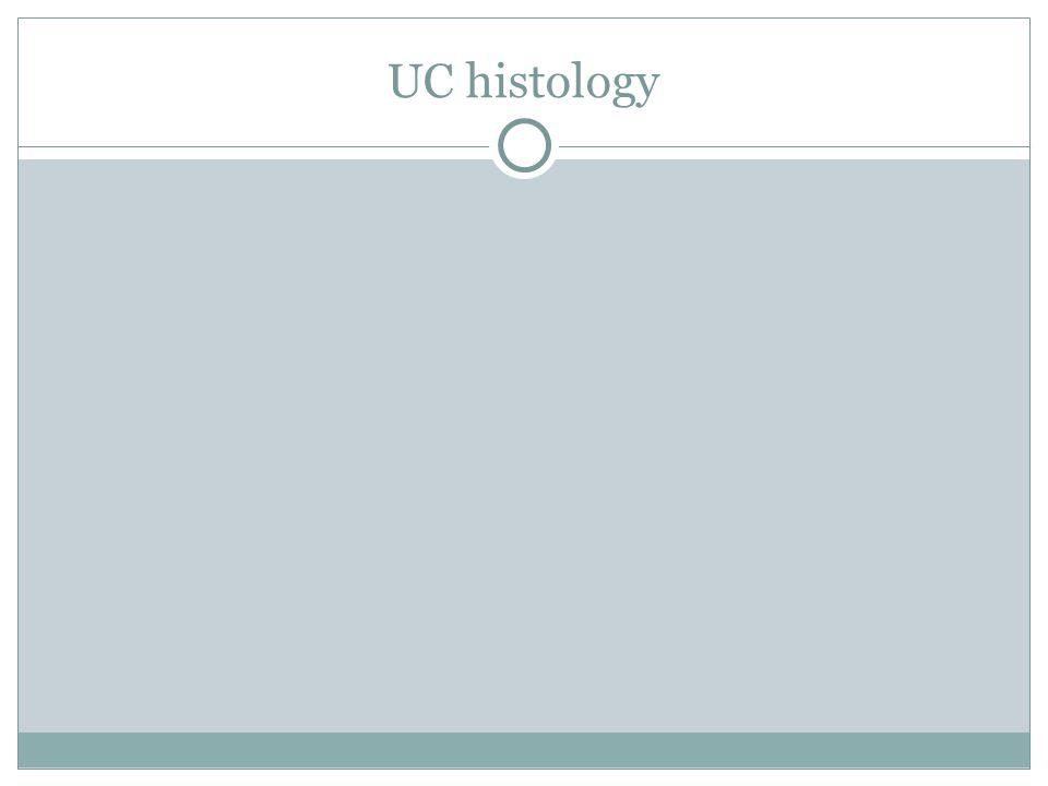 UC histology