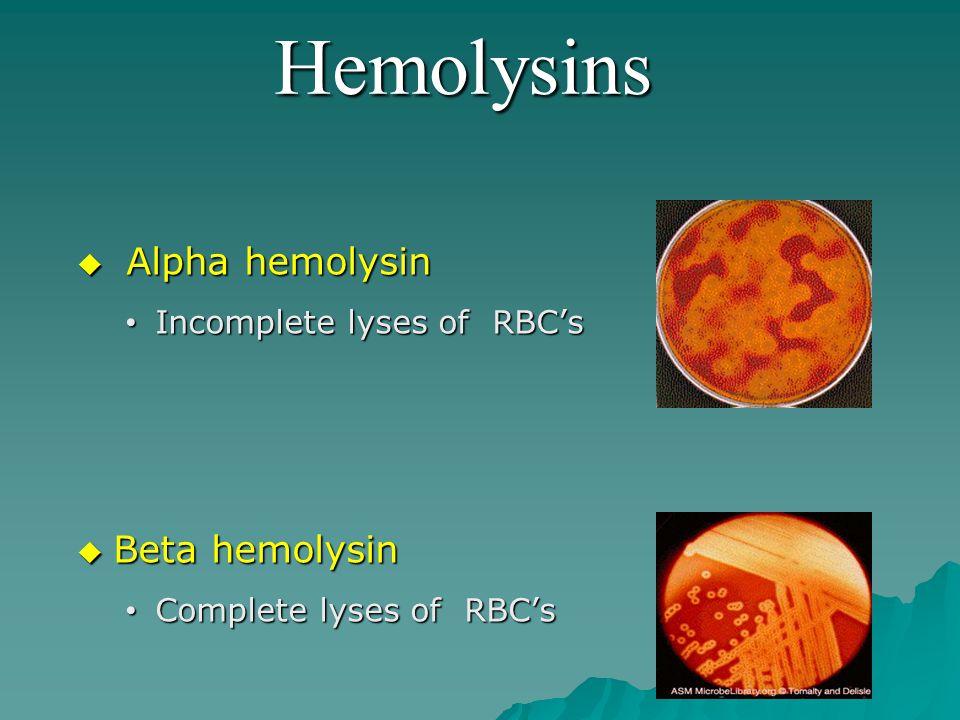 Hemolysins  Alpha hemolysin Incomplete lyses of RBC's Incomplete lyses of RBC's  Beta hemolysin Complete lyses of RBC's Complete lyses of RBC's