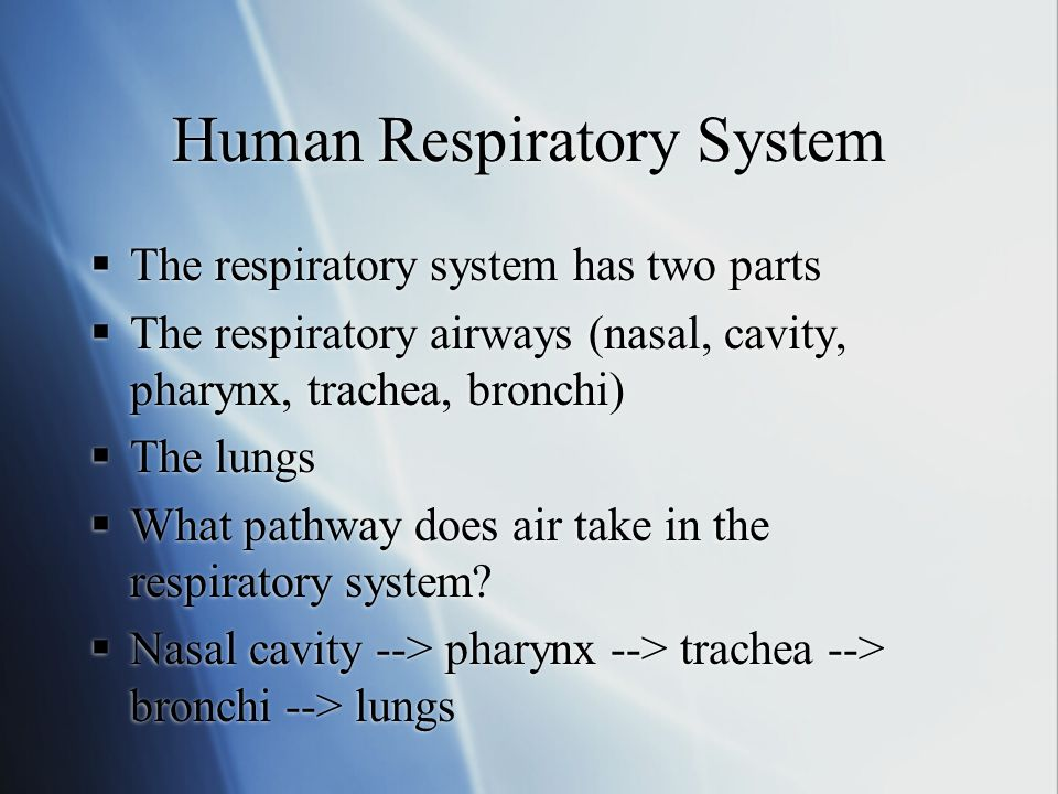 Respiratory System Lung Bronchioles Trachea Nasal Cavity Diaphragm Mouth