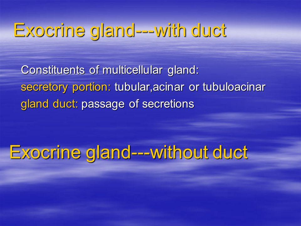 Exocrine gland