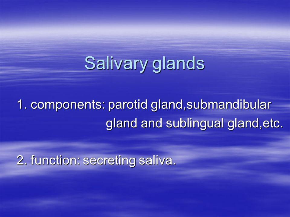 The characteristics of 3 pairs of salivary glands Parotid gland Submandibular gland Sublingual gland AciniDuctsSecretion Pure serous gland Long I.D.