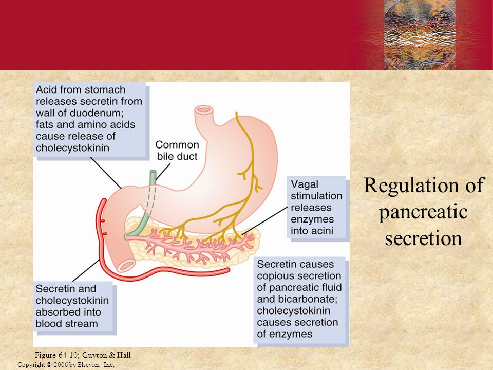 Copyright © 2006 by Elsevier, Inc. Regulation of pancreatic secretion Figure 64-10; Guyton & Hall