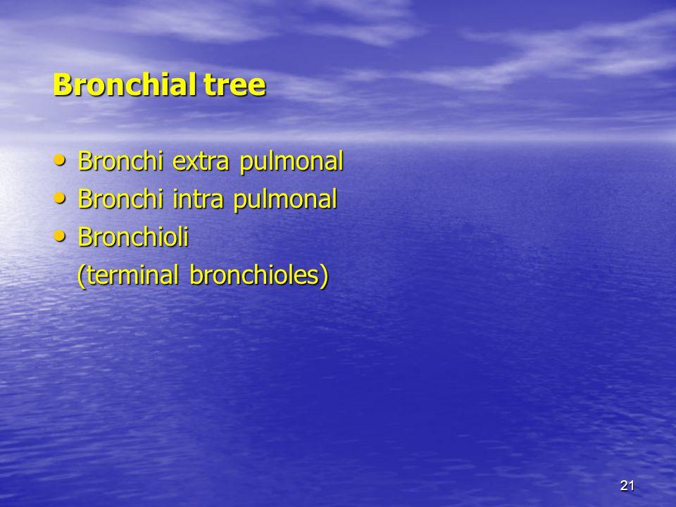 21 Bronchial tree Bronchi extra pulmonal Bronchi extra pulmonal Bronchi intra pulmonal Bronchi intra pulmonal Bronchioli Bronchioli (terminal bronchio