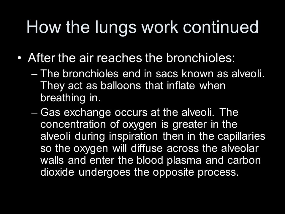 How the lungs work continued After the air reaches the bronchioles: –The bronchioles end in sacs known as alveoli.