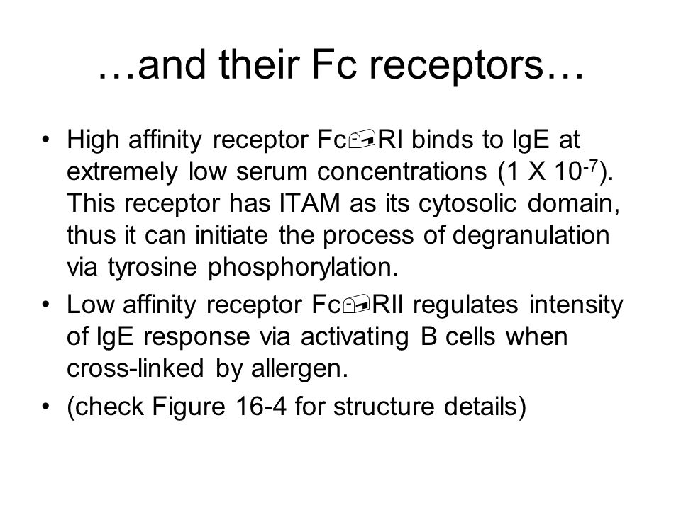 Localized Type III Reactions: 1.Injection of an Antigen: Can lead to an acute Arthus reaction within 4-8 hours Localized tissue and vascular damage result from accumulation of fluid (edema) and RBC (erythema) Severity can vary from mild swelling to redness to tissue necrosis 2.Insect bite: May first have a rapid type I reaction Some 4-8 hours later a typical Arthus reaction develops