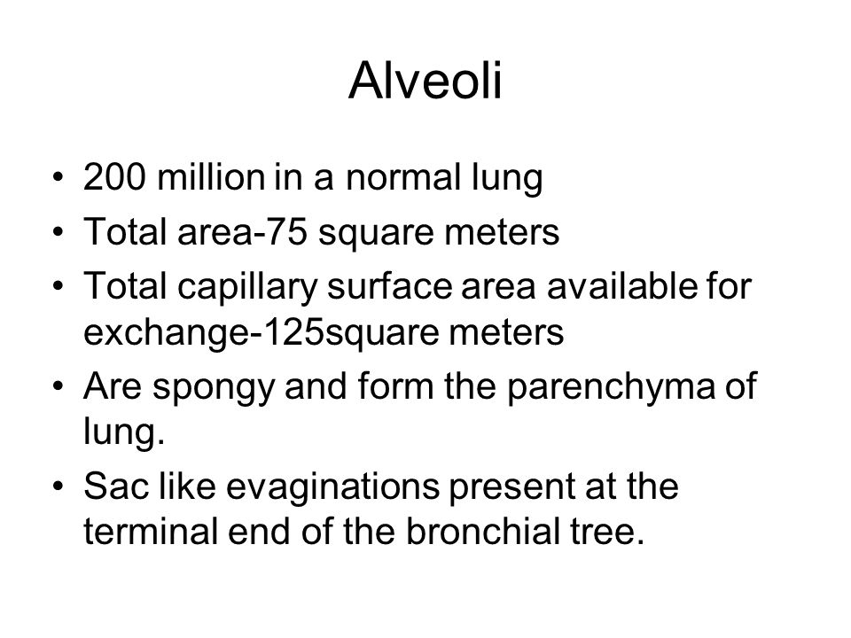 Alveoli 200 million in a normal lung Total area-75 square meters Total capillary surface area available for exchange-125square meters Are spongy and form the parenchyma of lung.