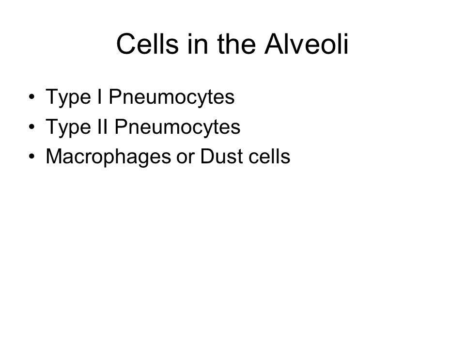Cells in the Alveoli Type I Pneumocytes Type II Pneumocytes Macrophages or Dust cells