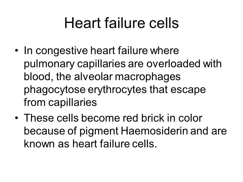 Heart failure cells In congestive heart failure where pulmonary capillaries are overloaded with blood, the alveolar macrophages phagocytose erythrocytes that escape from capillaries These cells become red brick in color because of pigment Haemosiderin and are known as heart failure cells.