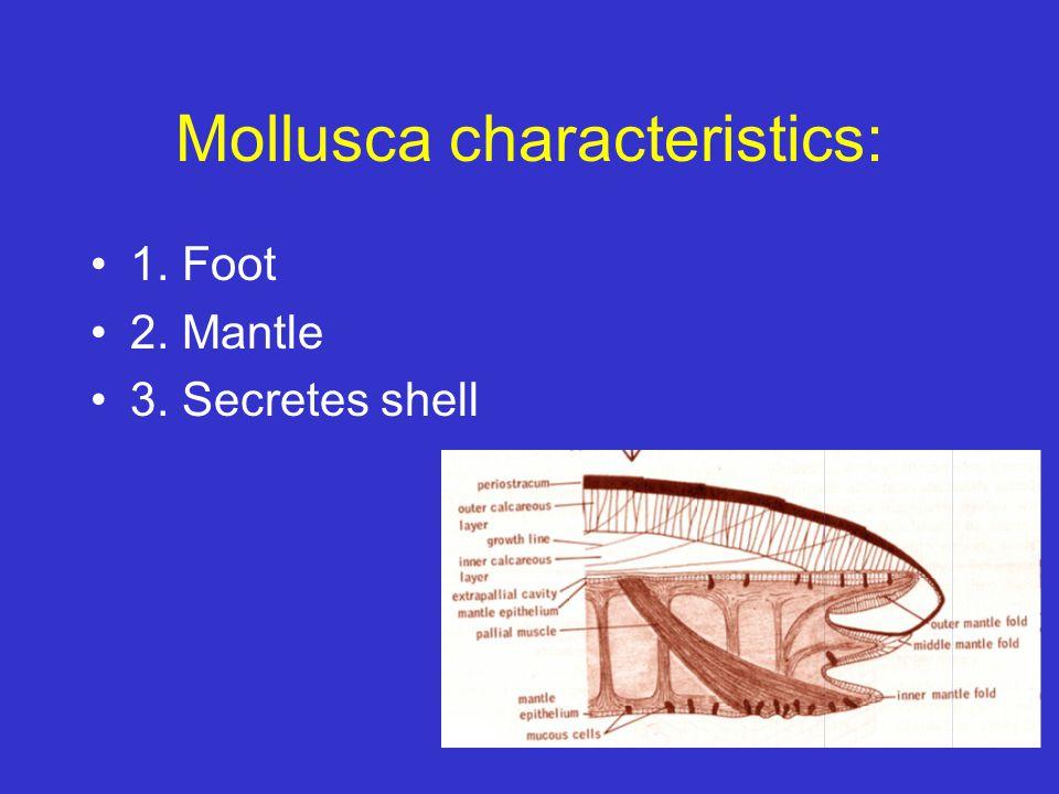 Mollusca characteristics: 1. Foot 2. Mantle 3. Secretes shell