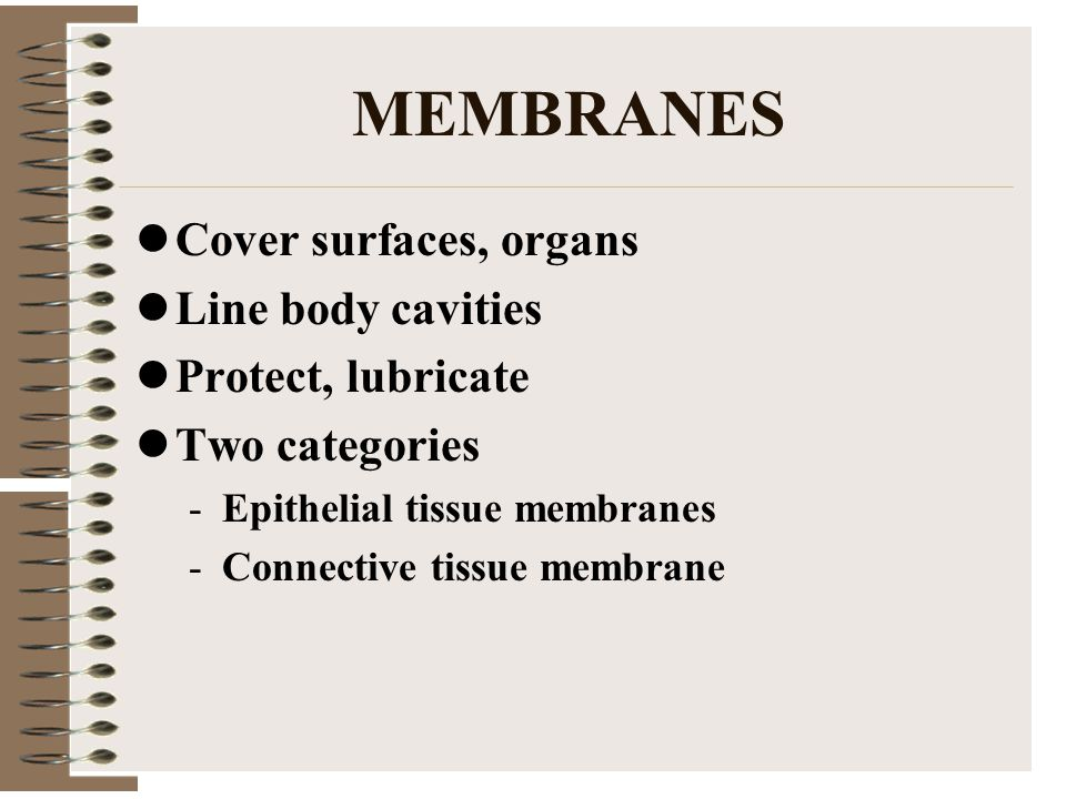 MEMBRANES Cover surfaces, organs Line body cavities Protect, lubricate Two categories -Epithelial tissue membranes -Connective tissue membrane