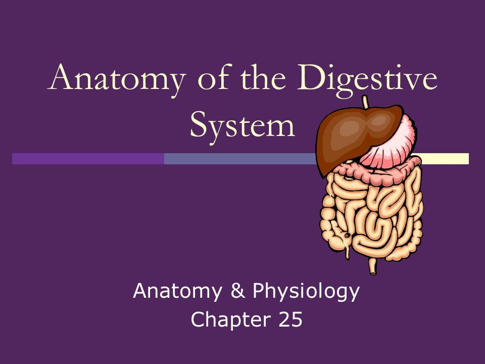 Small intestine  Main site of digestion & absorption  3 divisions: Duodenum Jejunum Ileum