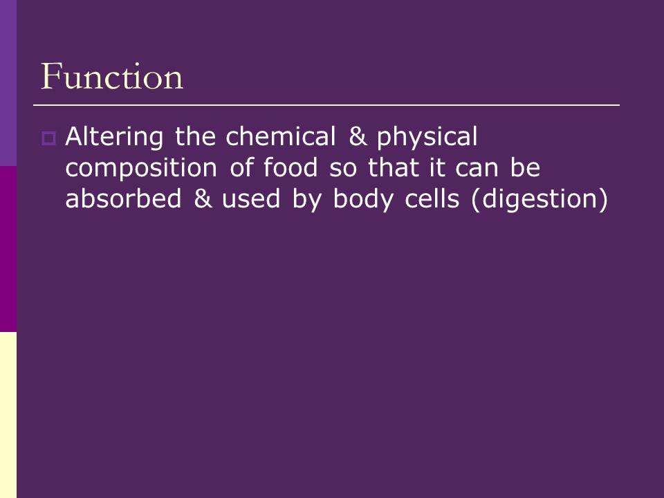 Pharynx  Food now called a bolus leaves mouth & enters oropharynx  Food does not go thru nasopharynx