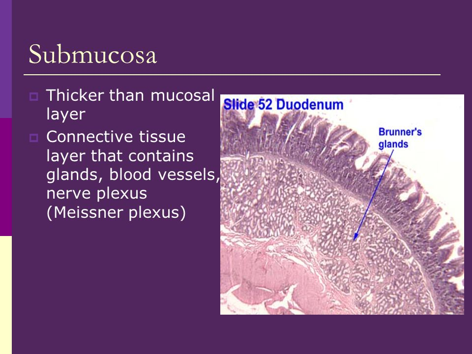Wall of Large Intestine  Intestinal mucus glands which produce mucus to lubricate feces  Longitudinal muscle fibers form strips called taeniae coli & circular muscles are grouped into rings that produce pouches, haustra