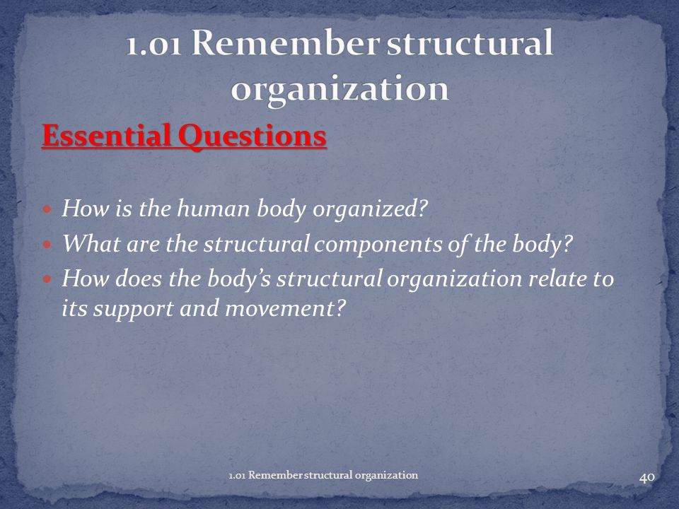Essential Questions How is the human body organized.