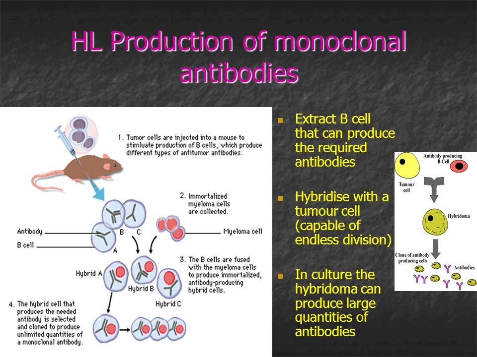 HL Production of monoclonal antibodies Extract B cell that can produce the required antibodies Hybridise with a tumour cell (capable of endless divisi