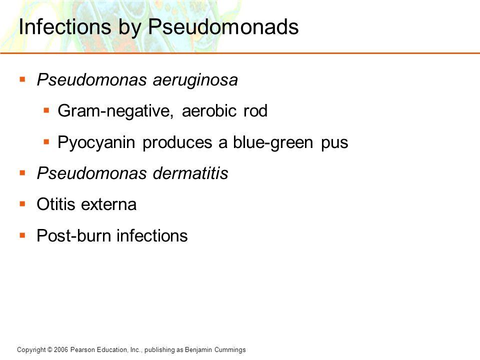 Copyright © 2006 Pearson Education, Inc., publishing as Benjamin Cummings Infections by Pseudomonads  Pseudomonas aeruginosa  Gram-negative, aerobic