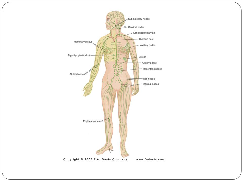 Lymphatic System Fluid is moving under low pressure and against gravity – How.