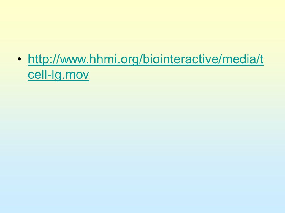 http://www.hhmi.org/biointeractive/media/t cell-lg.movhttp://www.hhmi.org/biointeractive/media/t cell-lg.mov