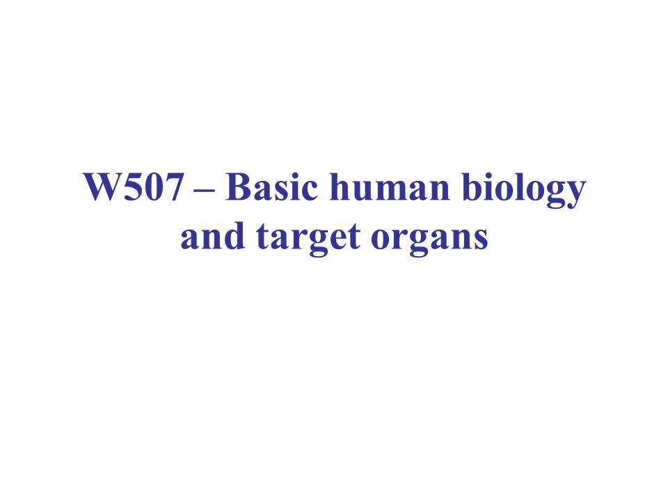 W507 – Basic human biology and target organs