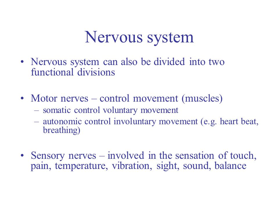 Nervous system Nervous system can also be divided into two functional divisions Motor nerves – control movement (muscles) –somatic control voluntary movement –autonomic control involuntary movement (e.g.