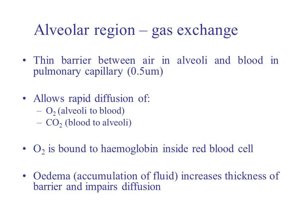 Alveolar region – gas exchange Thin barrier between air in alveoli and blood in pulmonary capillary (0.5um) Allows rapid diffusion of: –O 2 (alveoli to blood) –CO 2 (blood to alveoli) O 2 is bound to haemoglobin inside red blood cell Oedema (accumulation of fluid) increases thickness of barrier and impairs diffusion