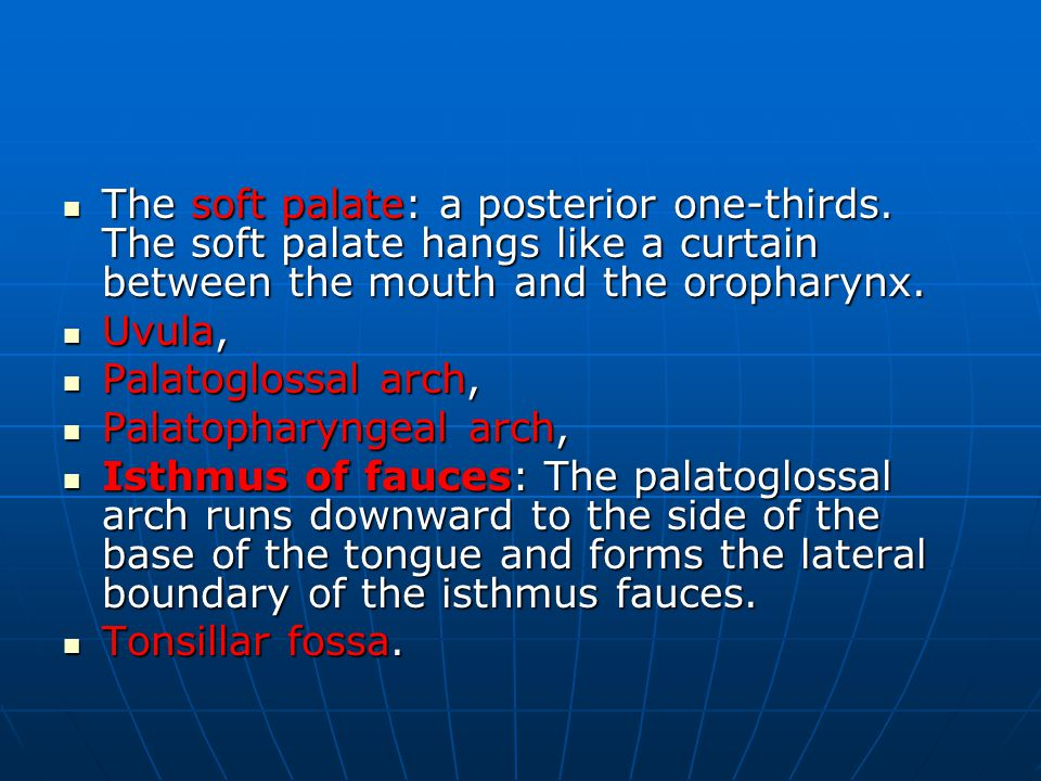 The soft palate: a posterior one-thirds.