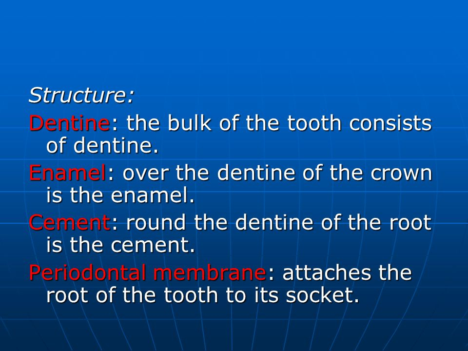 Structure: Dentine: the bulk of the tooth consists of dentine.