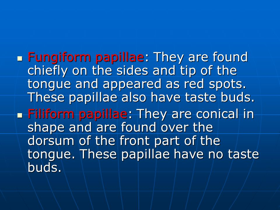 Fungiform papillae: They are found chiefly on the sides and tip of the tongue and appeared as red spots.