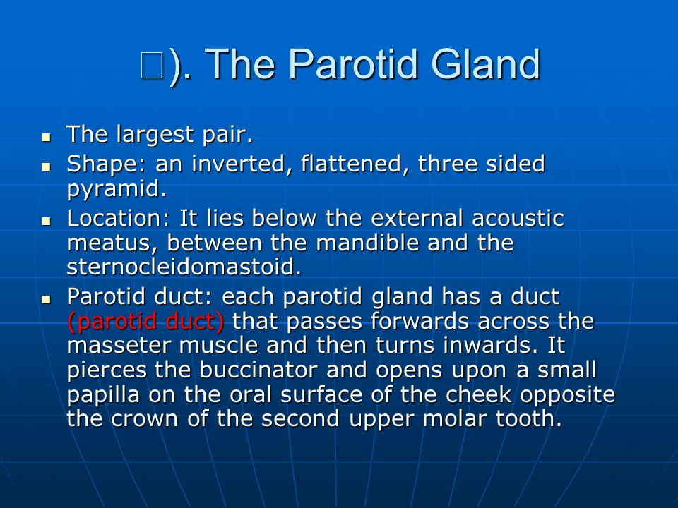 Ⅰ ).The Parotid Gland The largest pair. The largest pair.