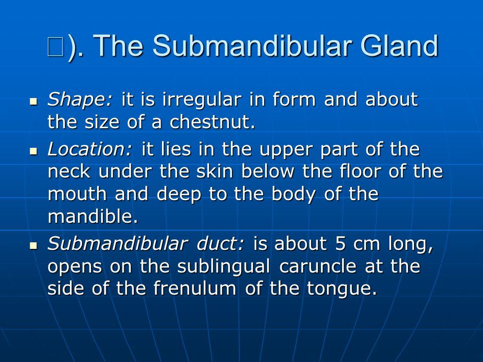 Ⅱ ).The Submandibular Gland Shape: it is irregular in form and about the size of a chestnut.