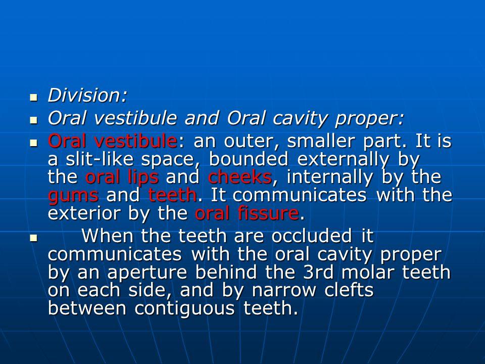 Division: Division: Oral vestibule and Oral cavity proper: Oral vestibule and Oral cavity proper: Oral vestibule: an outer, smaller part.