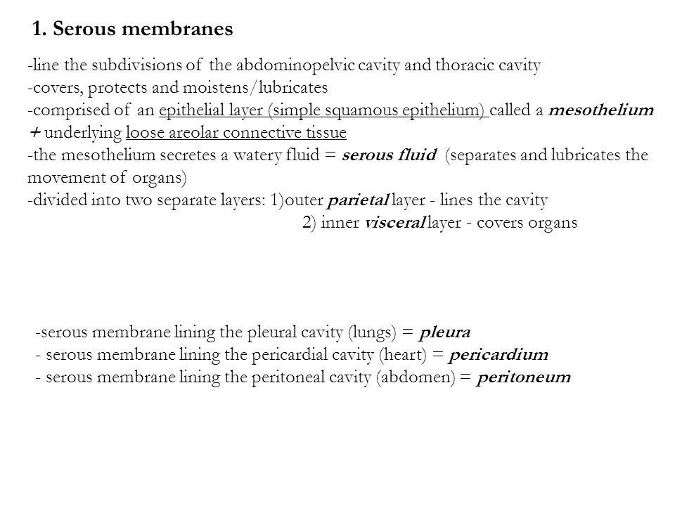 2.Mucous membranes -line cavities that directly communicate with the exterior environment e.g.