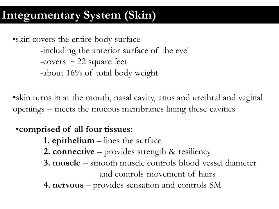 Skin colour 1.dermal blood supply: -dermal blood supply comes from the larger blood vessels found in the subcutaneous layer (located under the dermis) -these larger vessels branch to form a cutaneous plexus (plexus = network) - this supplies the reticular layer -vessels continue up and branch further into the papillary plexus - found in the dermal papillae -blood is drained out of the papillae by tiny veins = venules -these drain into the larger veins of the dermis -> which then drain into the SQ layer - hemoglobin bound to O 2 – bright red in color -gives pinkish cast to skin -when hemoglobin lacks O 2 – bluish colour -this bluish skin colour = cyanosis -the thin skin of the lips and transparency of the nail enables us to see the blood in the peripheral circulation = red lips and pink nails