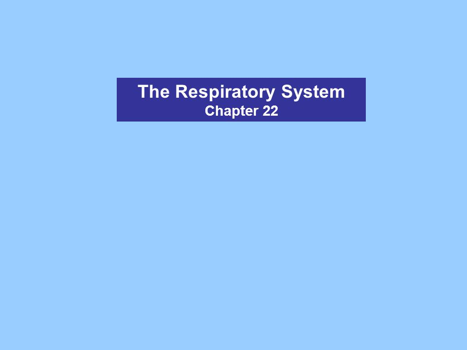 The Respiratory System Chapter 22