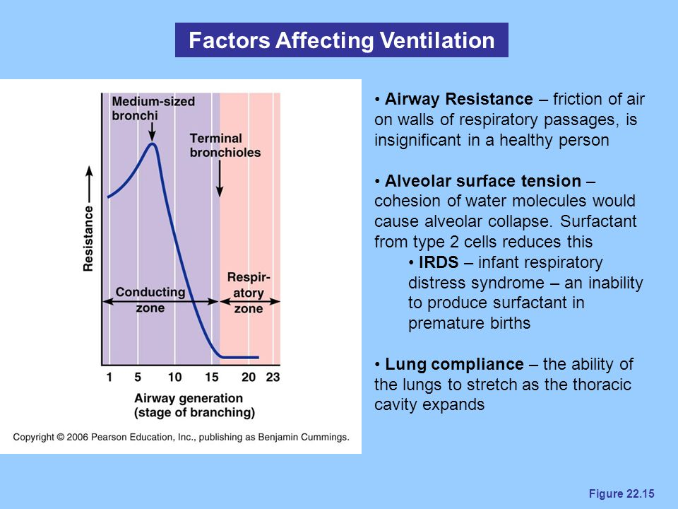 Figure 22.15 Factors Affecting Ventilation Airway Resistance – friction of air on walls of respiratory passages, is insignificant in a healthy person