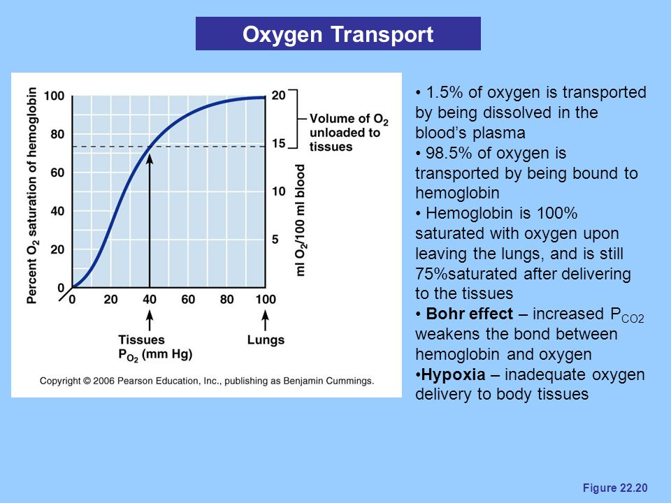 Figure 22.20 Oxygen Transport 1.5% of oxygen is transported by being dissolved in the blood's plasma 98.5% of oxygen is transported by being bound to