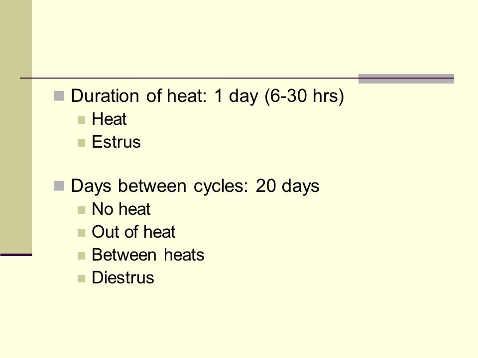 Duration of heat: 1 day (6-30 hrs) Heat Estrus Days between cycles: 20 days No heat Out of heat Between heats Diestrus