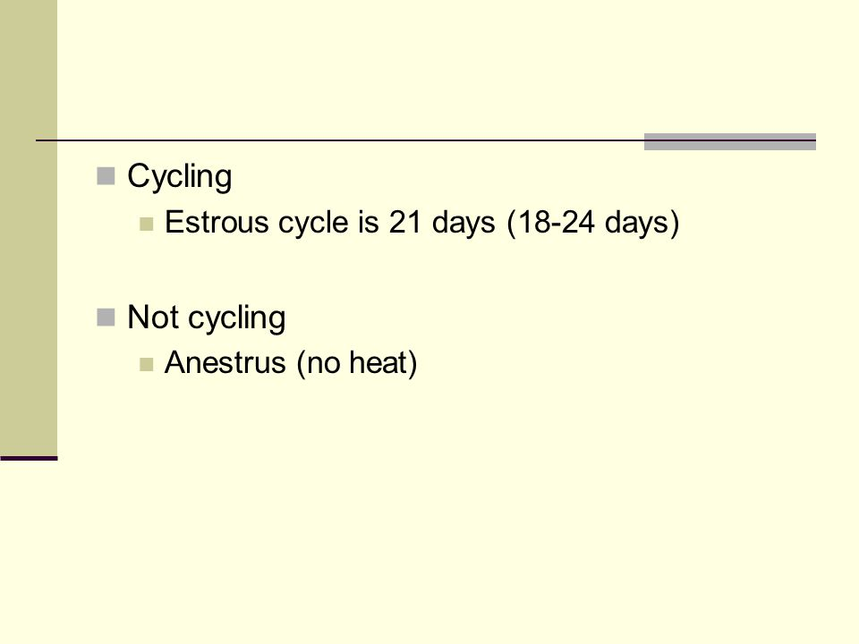 Cycling Estrous cycle is 21 days (18-24 days) Not cycling Anestrus (no heat)