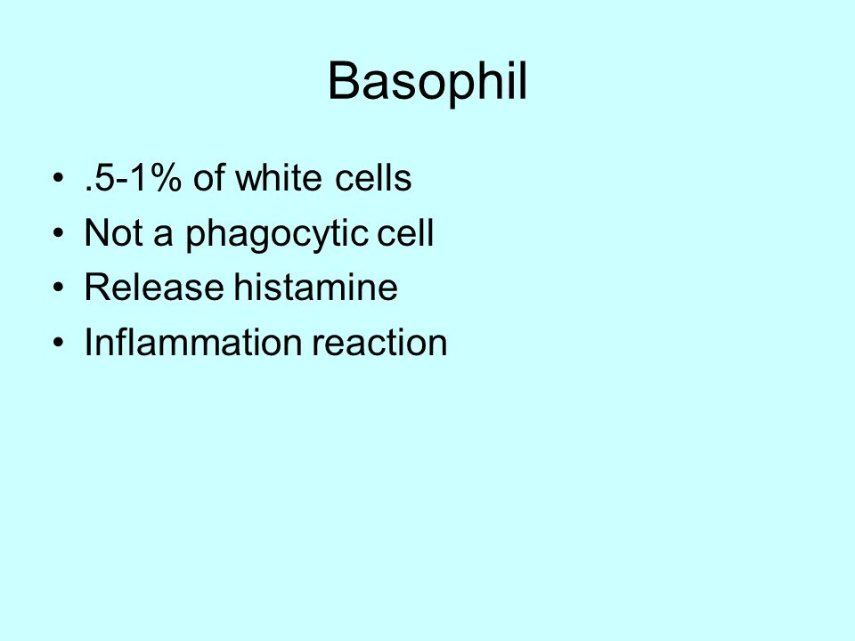 Basophil.5-1% of white cells Not a phagocytic cell Release histamine Inflammation reaction