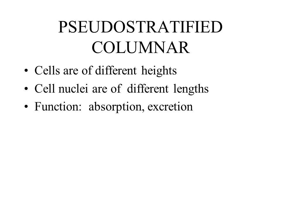 PSEUDOSTRATIFIED COLUMNAR Cells are of different heights Cell nuclei are of different lengths Function: absorption, excretion