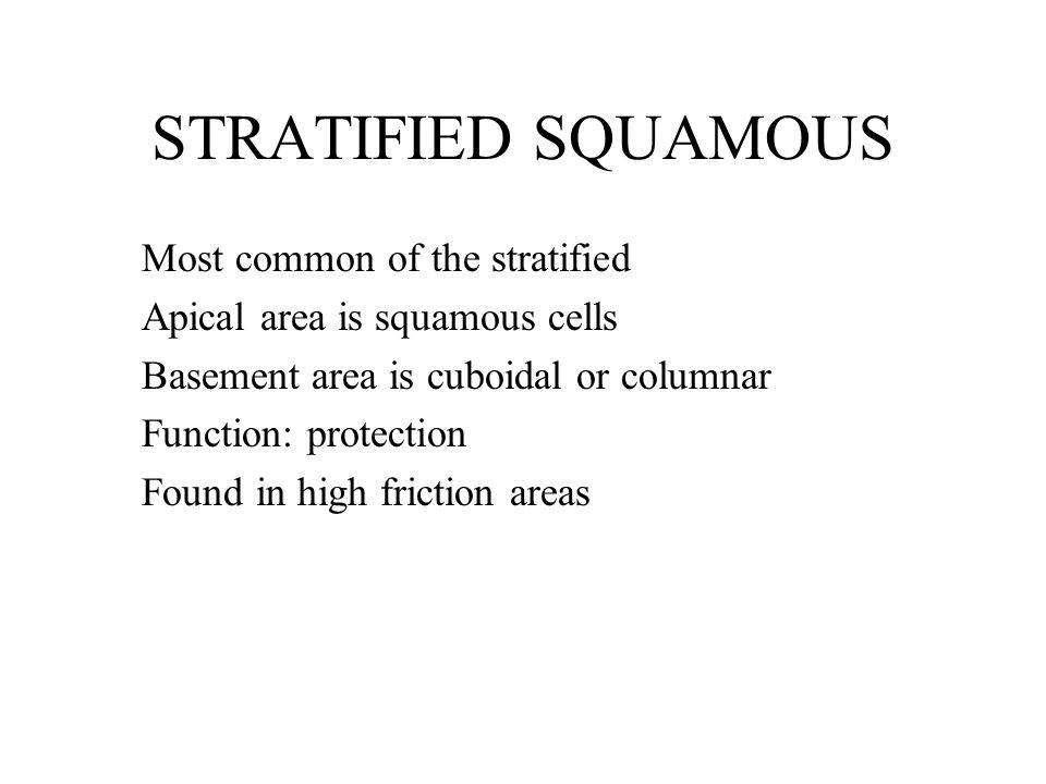 STRATIFIED SQUAMOUS Most common of the stratified Apical area is squamous cells Basement area is cuboidal or columnar Function: protection Found in high friction areas